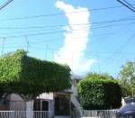 Florecitas en La Piedad, 36. Con la nube de febrero