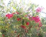 Florecitas en La Piedad,35