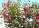 Florecitas en La Piedad,34
