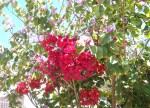 Florecitas en La Piedad, 32