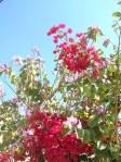 Florecitas en La Piedad, 31