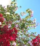 Florecitas en La Piedad, 30