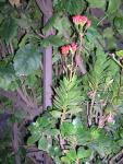 Florecitas en La Piedad, 19