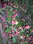 Florecitas en La Piedad, 17