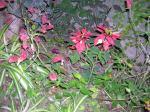 Florecitas en La Piedad, 16