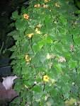 Florecitas en La Piedad, 15