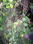 Florecitas en La Piedad, 14