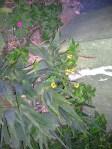 Florecitas en La Piedad, 12