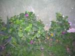 Florecitas en La Piedad, 10