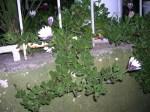 Florecitas en La Piedad, 11
