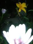 Florecitas en La Piedad, 8