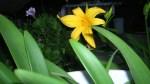 Florecitas en La Piedad, 7