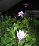 Florecitas en La Piedad, 5