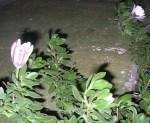 Florecitas en La Piedad, 6