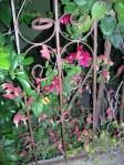 Florecitas en La Piedad, 4