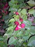Florecitas en La Piedad, 3