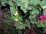 Florecitas en La Piedad, 2