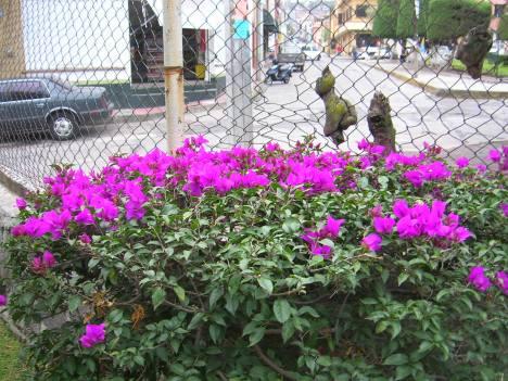 Frente al Parque Morelos 2